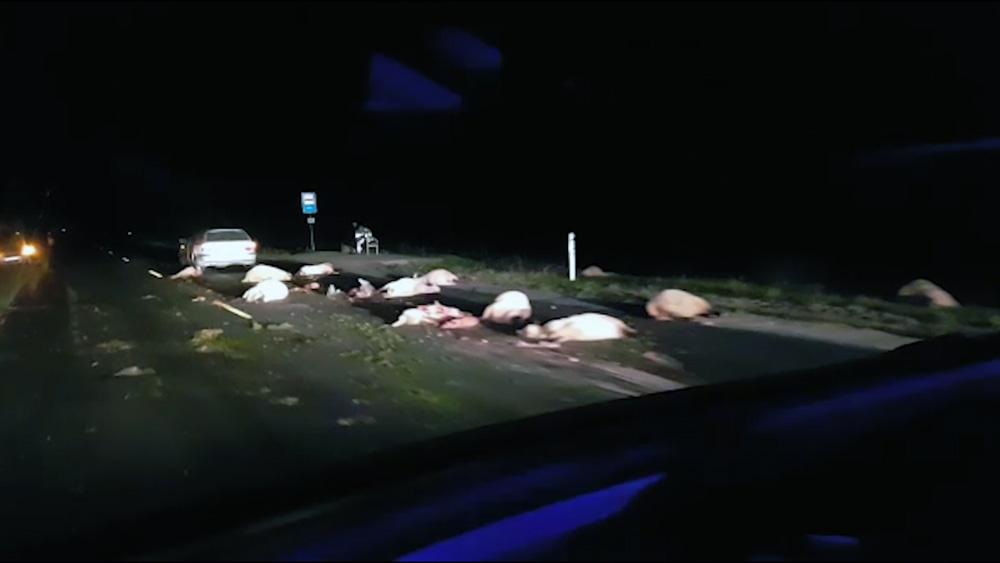 BMW vadītājs notriec 20 aitas