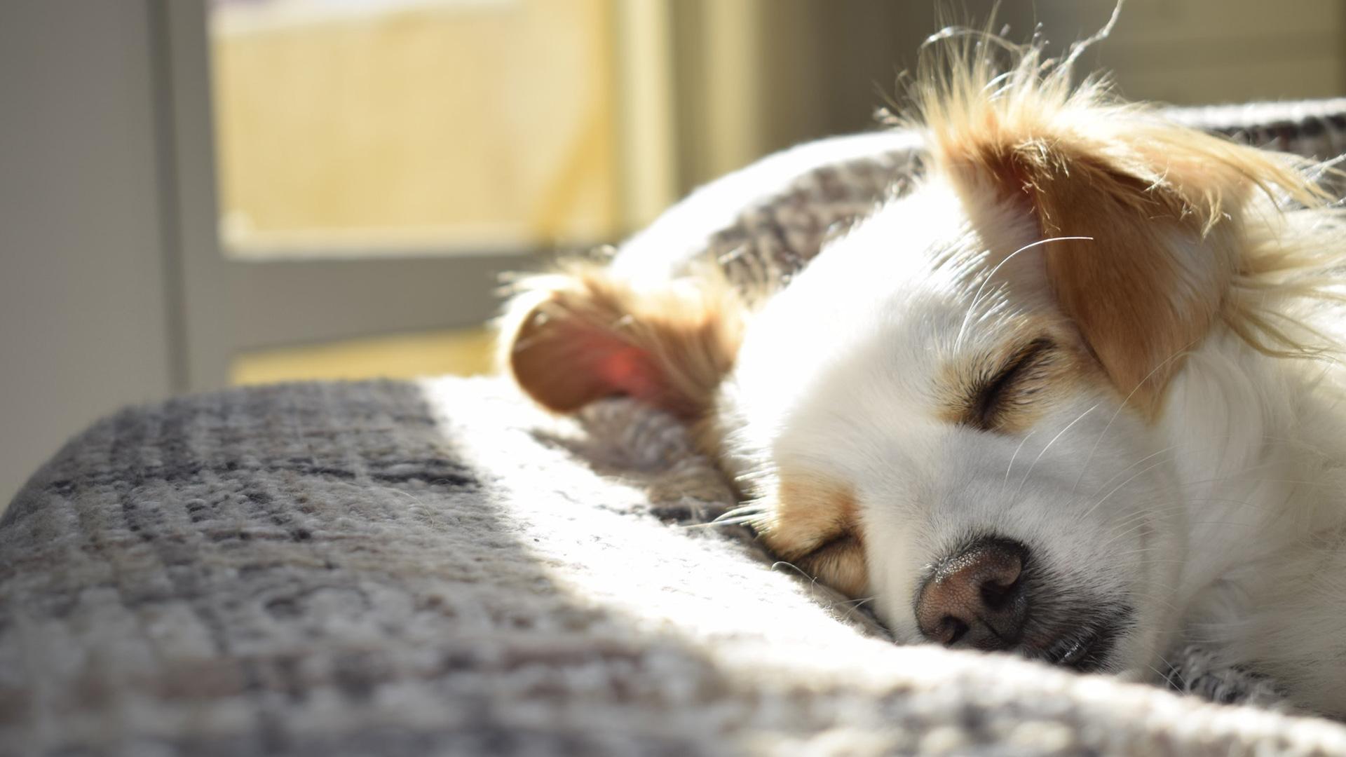 BIOR aicina suņu saimniekus piedalīties pētījumā