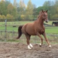Latgalē trūkst zirgu vetārstu