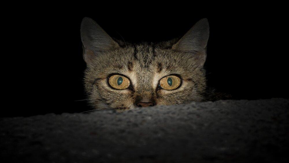 Savvaļas kaķu nedienas Ventspilī