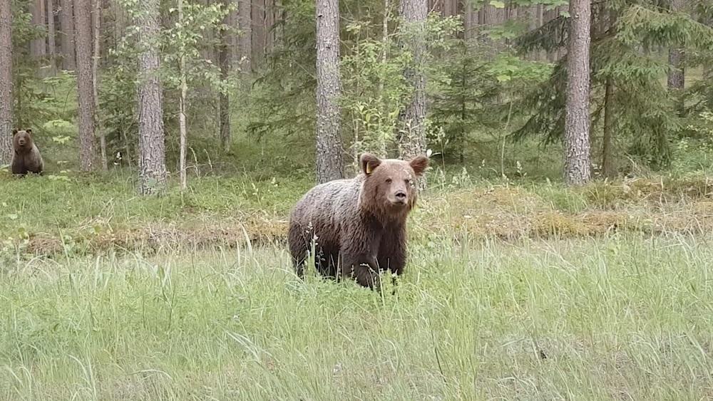Veido lāču izplatības karti