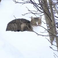 Mundigciemā uzcelta māja klaiņojošajiem kaķiem
