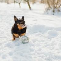 Sāls, ko kaisa uz ielām, var radīt veselības problēmas suņiem