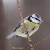 Iedzīvotāji aicināti skaitīt putnus