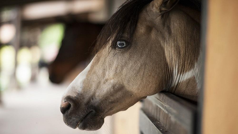 Distancēšanās un  mājsēde arī zirgiem