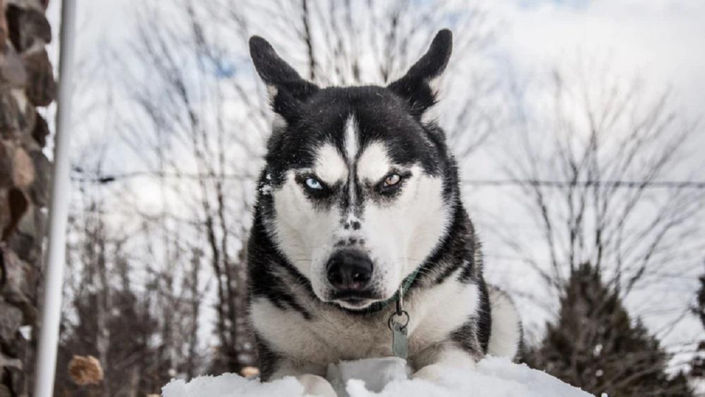 Par katru suņu uzbrukumu svarīgi ziņot