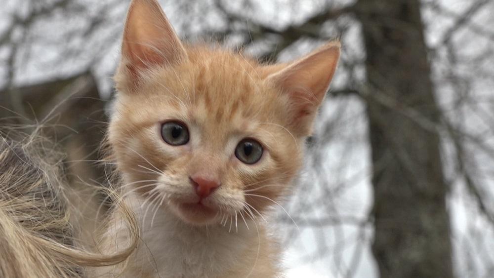 No slīcināšanas izglābj kaķi; vainīgie saņems bargu sodu