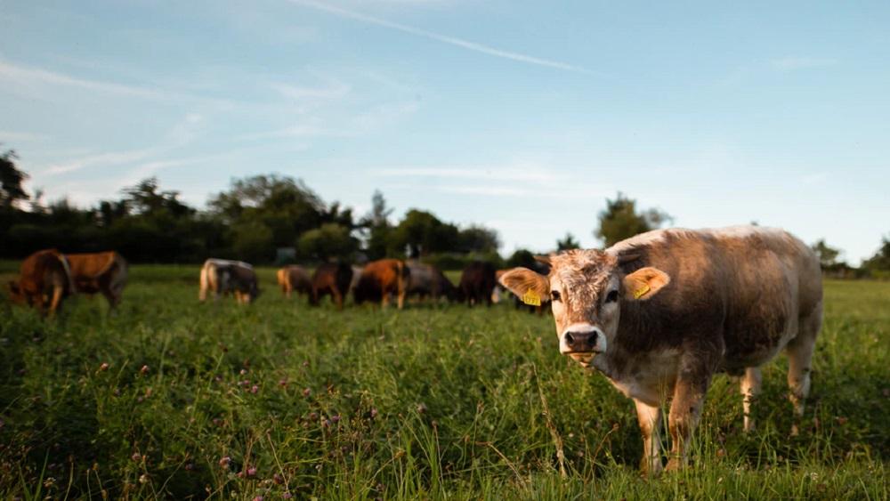 Sākusies ceturtā mobilā ganāmpulka sezona