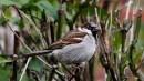 Iedzīvotāju ziņojumiem par putnu novērojumiem ir nozīme
