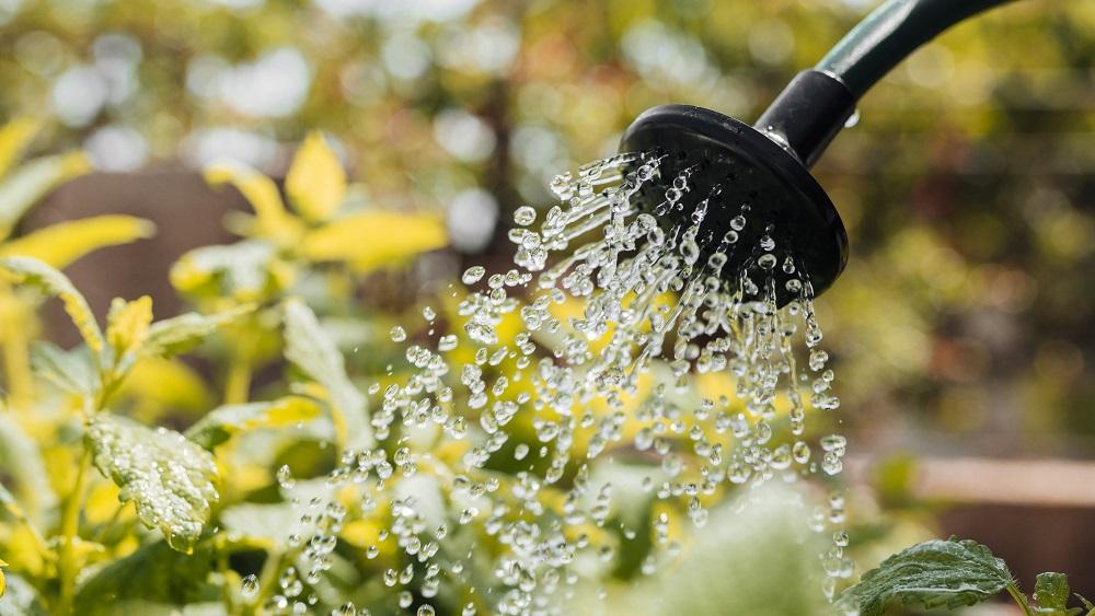 Kā lielajā karstumā pasargāt augus mazdārziņā?