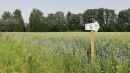 Beverīnas novadā tapis 16 kilometrus garš  puķu ceļš
