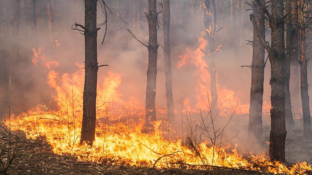 Paliekot karstākam, palielinās arī ugunsbīstamība mežos