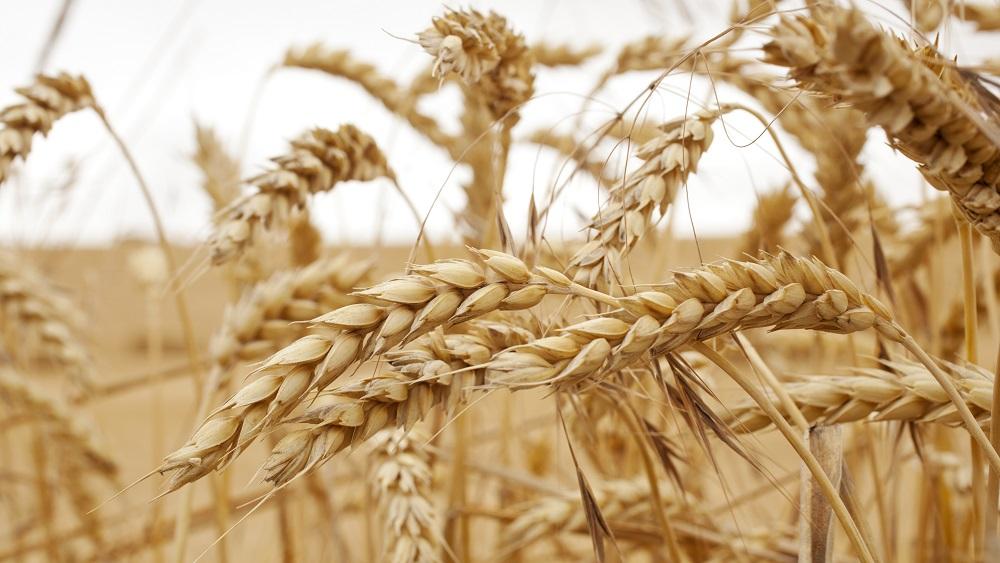 Pārtikas sadārdzināšanās lauksaimnieku ienākumus, visticamāk, nepalielinās