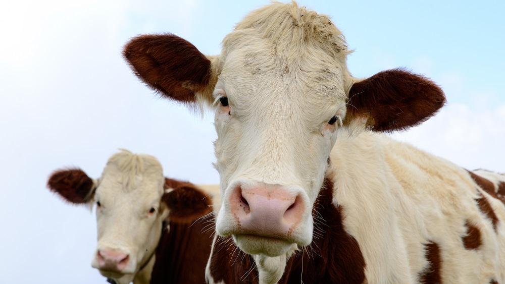 Lopkopjiem nākas glābt dzīvniekus karstumā