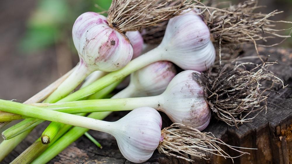 Aug pieprasījums bioloģiski audzētiem dārzeņiem