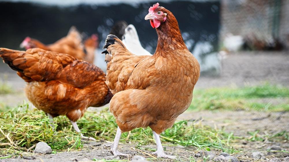 Cer panākt dzīvnieku valsts produktu patēriņa samazinājumu