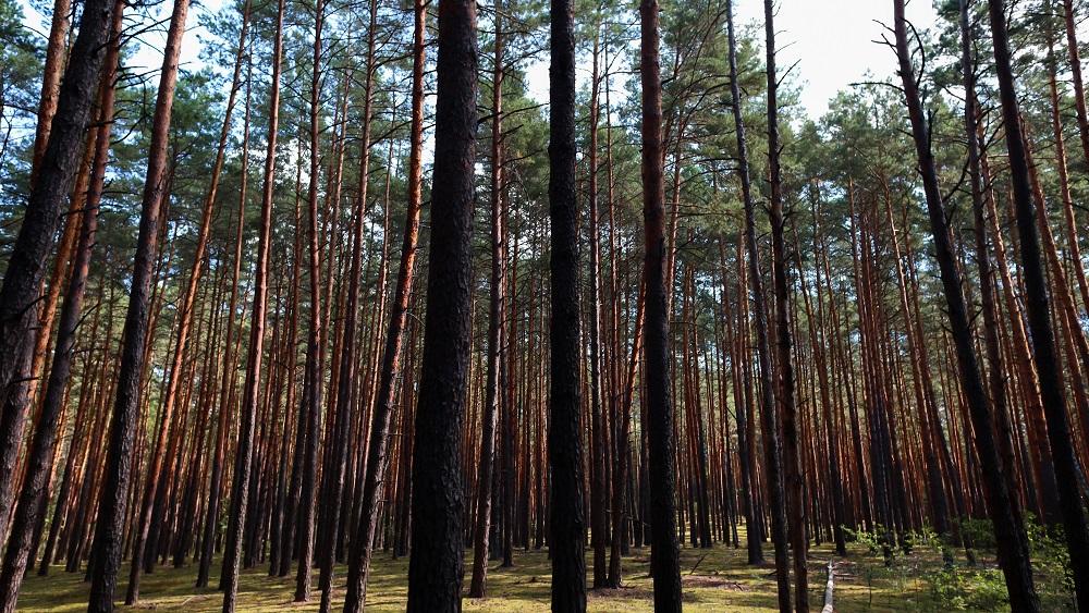 Radi, glābēji un zemessargi trīs dienas meklē mežā pazudušu sirmgalvi